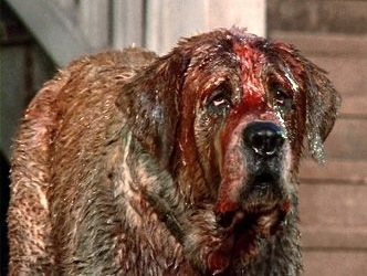 Cujo Stephen King Dog Breed