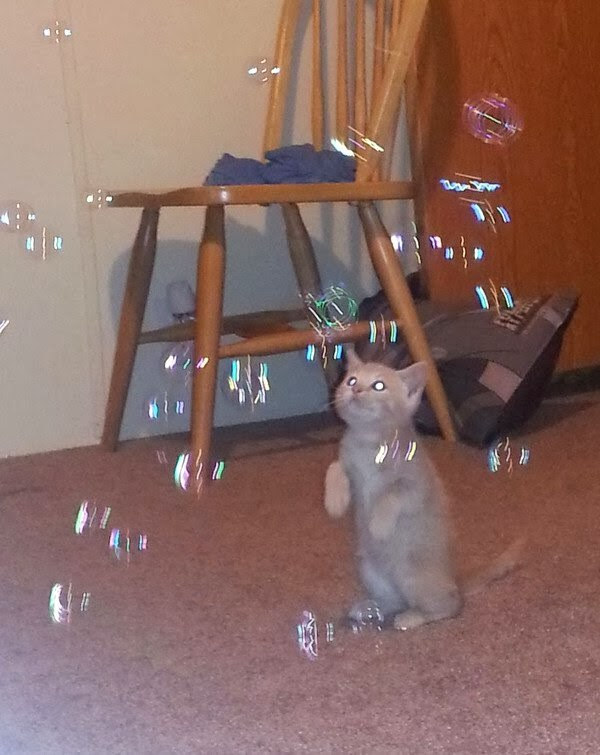 Funny cats - part 79 (35 pics + 10 gifs), kitten playing with bubbles
