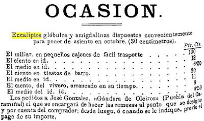 Más eucaliptos,  más   coníferas. Consecuencias de la sed de beneficio$ en la húmeda Galicia. El sector forestal. 1881_Anuncio+plantones+eucalipto+de+%2527Gandara+de+Oleiros%2527