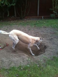 Winnie's Dog Blog: There I was