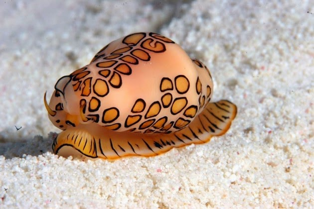 amazing-sea-animals-1