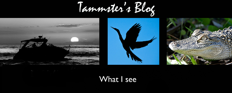 Tammster's Blog