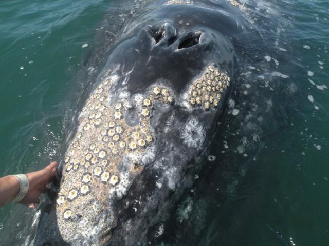 Marinbiologeneno Marinbiobloggen A Sea Side Shag