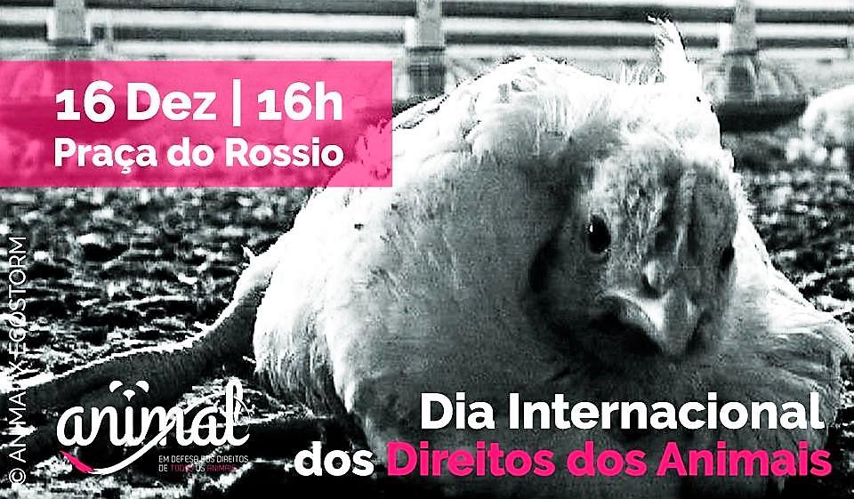 16 de dezembro, 16h: Lisboa