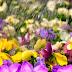 5 τρόποι ποτίσματος των φυτών σε περίοδο διακοπών