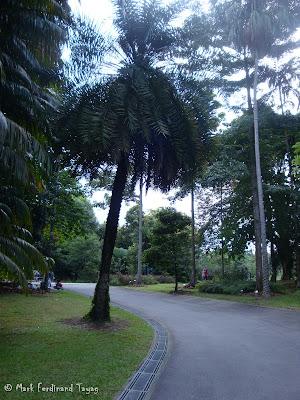 Singapore Botanic Gardens Photo 14