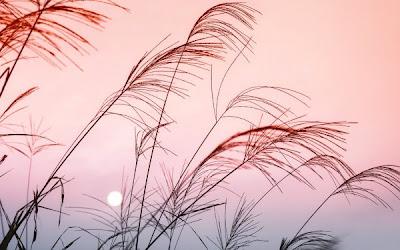 Gambar Pemandangan Indah rumput