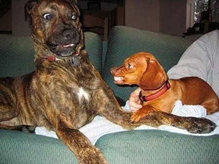animais de Por que o Comportamento Agressivo do Cão
