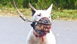 El mejor disfraz para tu perro