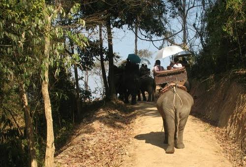 back of an elephant