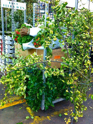 This Person Sold Only Branches Of Fruit Trees