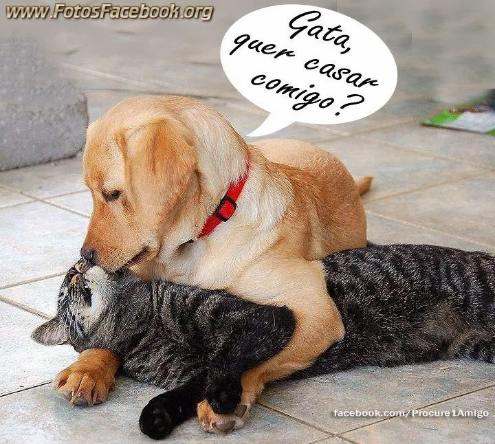 Famosos Imagens fofas de Animais para o Facebook - Fotos para Facebook UX42