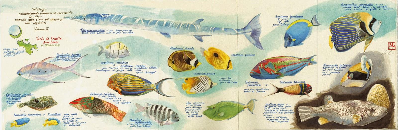 Ars et natura seychelles i pesci tropicali di luca marini artista e biologo marino - Pesci comuni in tavola ...