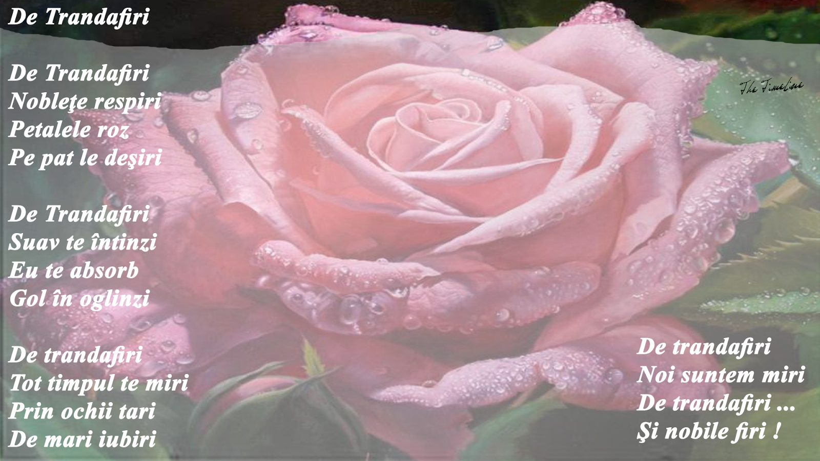 de trandafiri dragoste noblete iubire Maria Teodorescu Bahnareanu Wrinkles on my Timeline