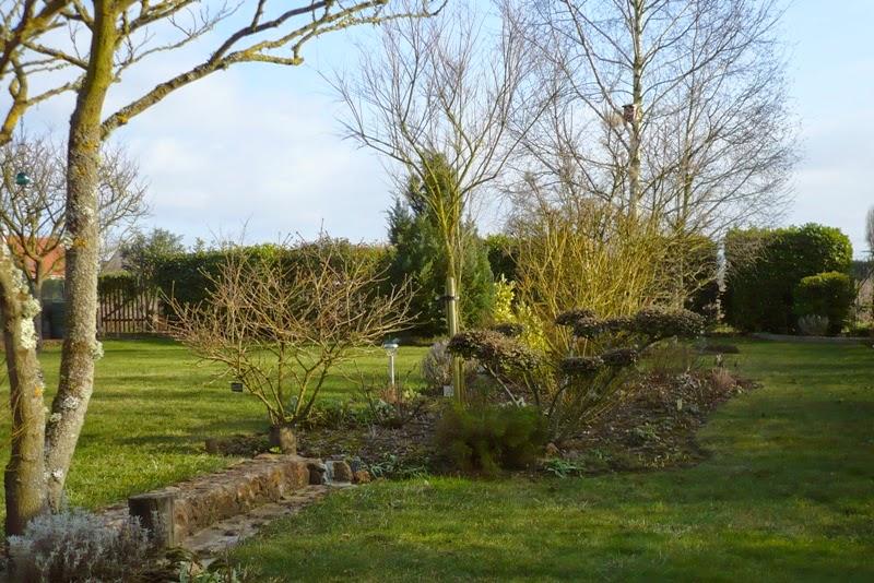 Le jardin de pacalou f vrier au jardin for Jardin lune fevrier 2015