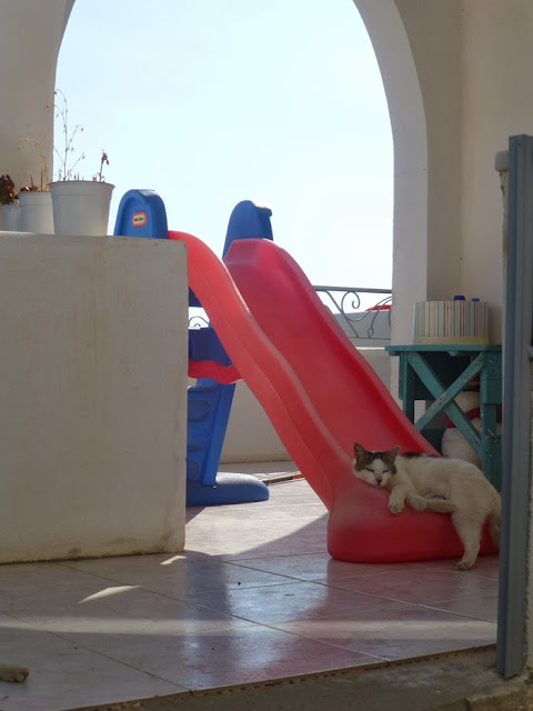 Cat sleeping on a kid's slide
