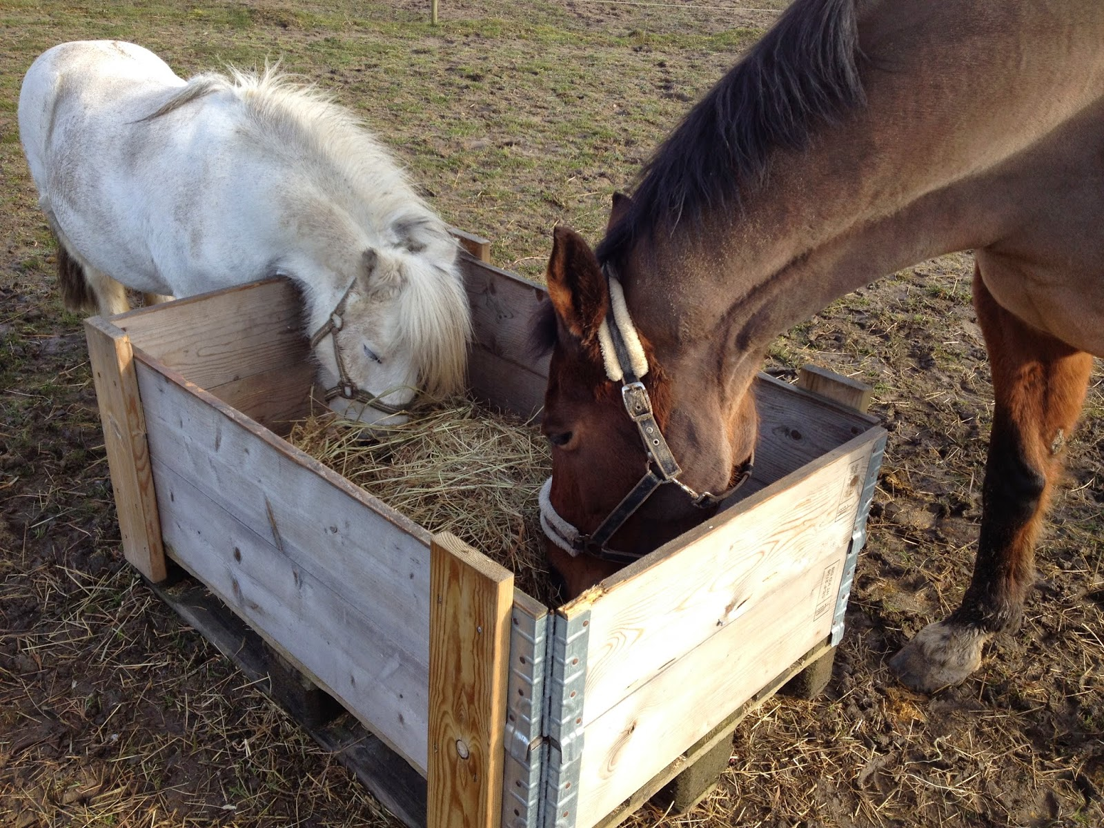 bygga höhäck häst