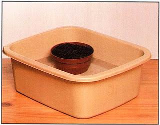 Полейте горшок методом погружения, поставив его в таз с водой, уровень которой должен быть ниже уровня почвы в горшке