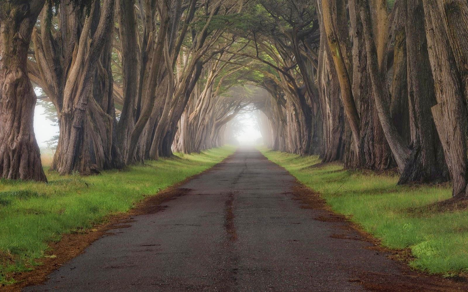 If i fondos de pantalla de naturaleza nature landscape for Fondos de pantalla alta resolucion