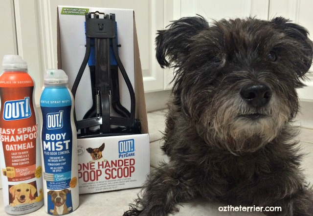 Oz the Terrier with OUT! Pet Care products found in RPG's New Puppy Holiday Bundle
