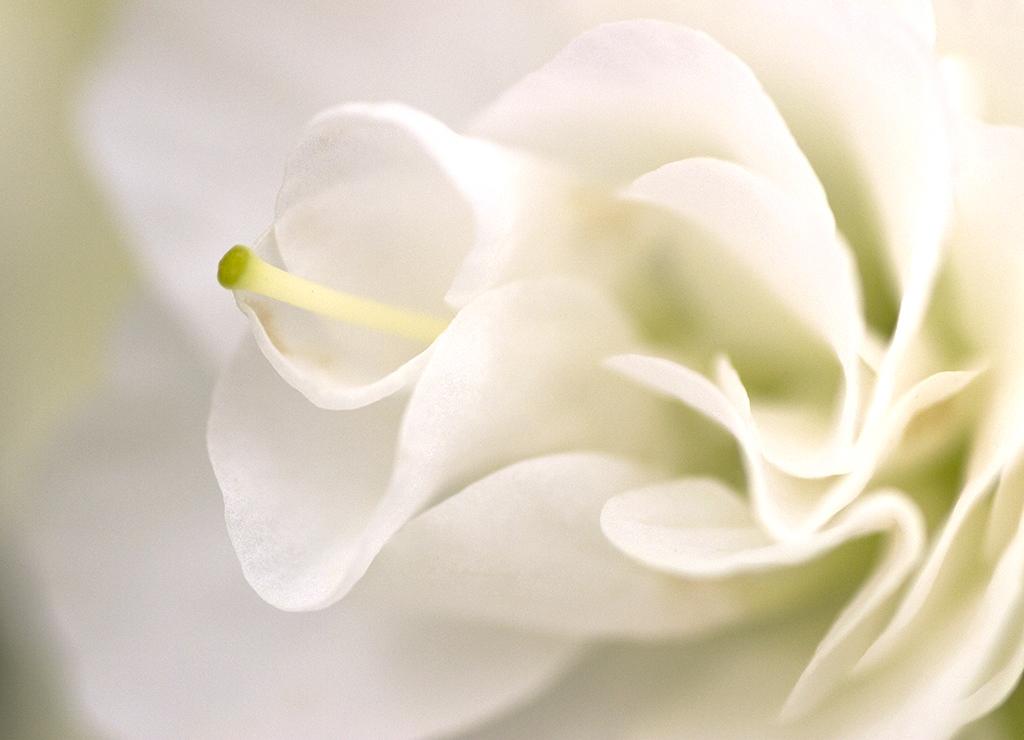 Fotografía macro flores azalea