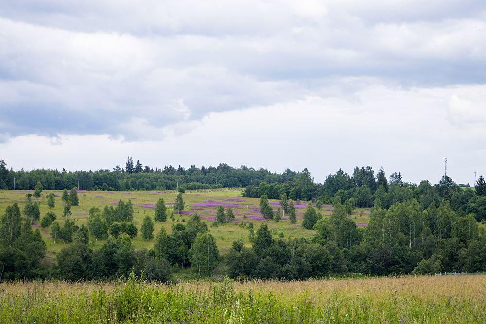 поле московская область