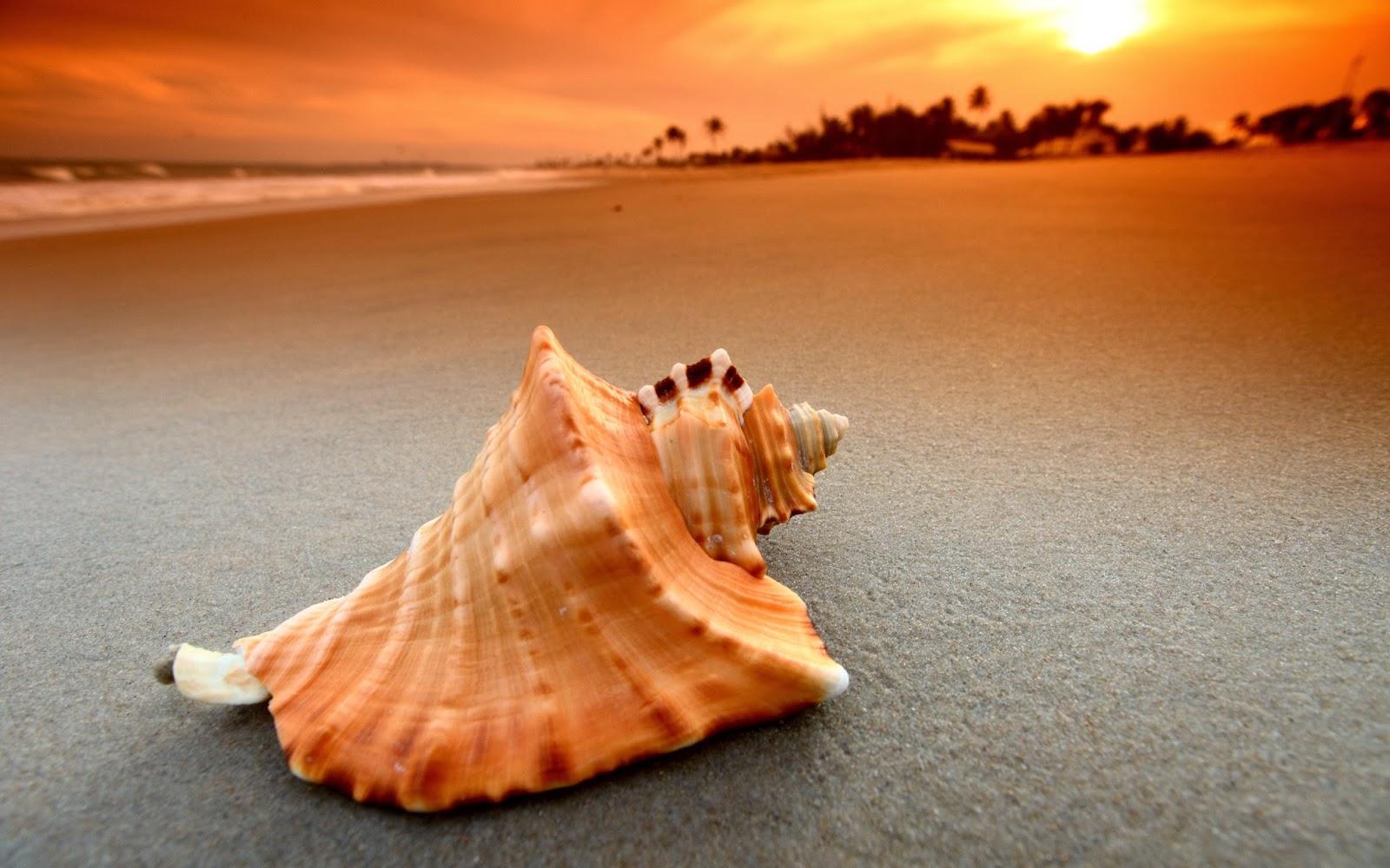 Sunset Beach Shells wallpaper - beauty walpaper