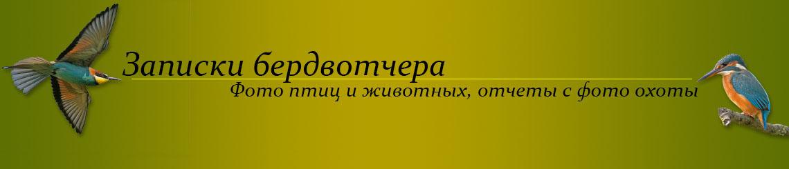 Записки бердвотчера