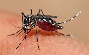 Dengue: sintomas, transmissão e prevenção