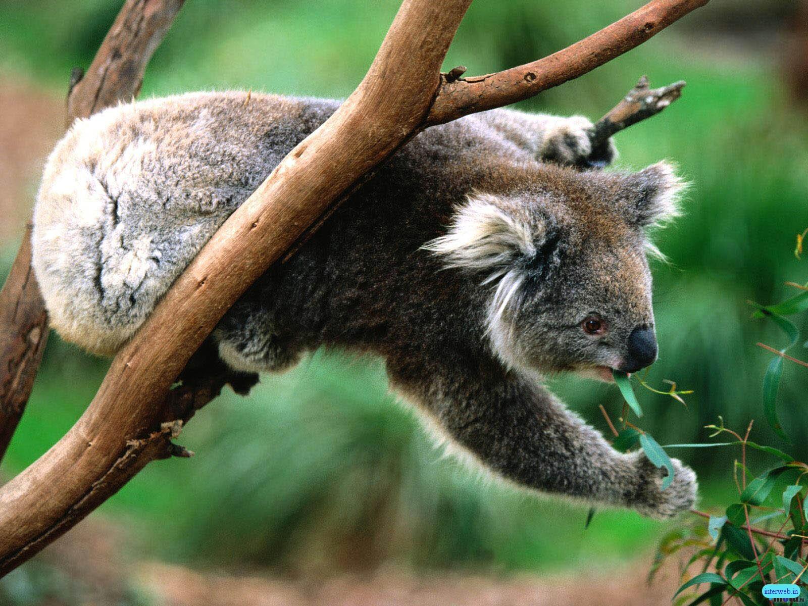 http://4.bp.blogspot.com/-gUFKqAuSq1A/Td0XR8LTpTI/AAAAAAAAA34/RvxYSKdlebE/s1600/animals+Images.jpg