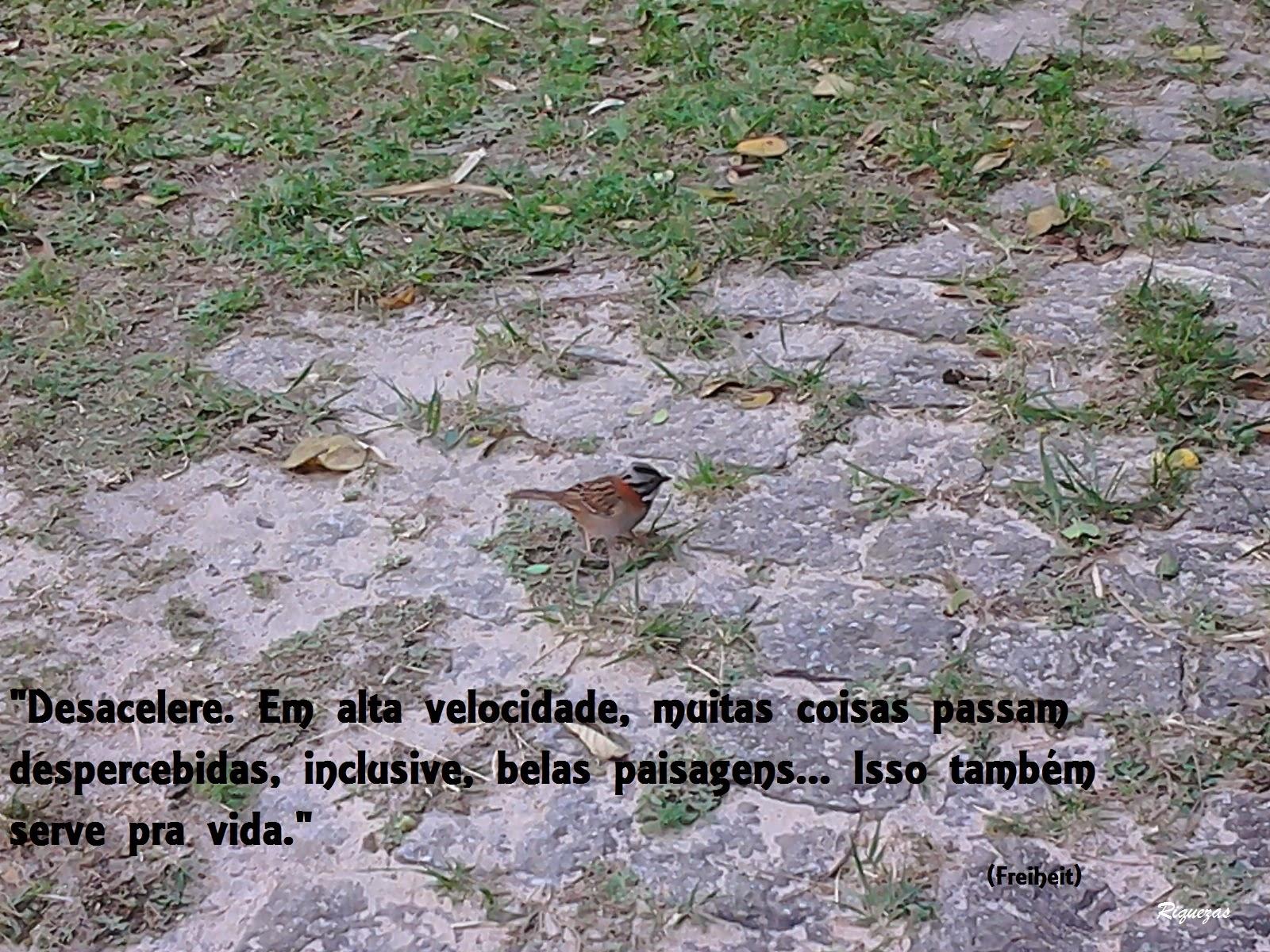 Foto tirada no Pico do Jaraguá