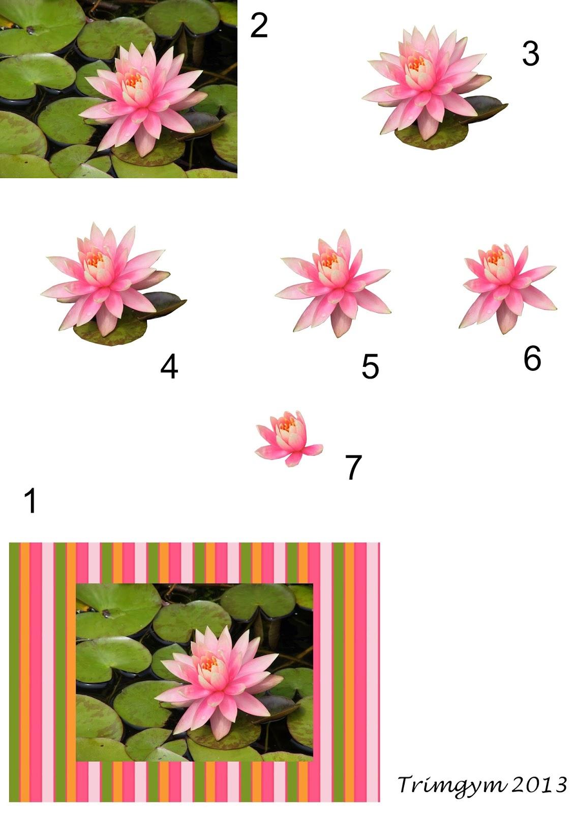 http://4.bp.blogspot.com/-gUmPkAhiwHU/UwUR34CxttI/AAAAAAAASBU/o1gnRtfOfzE/s1600/Waterlily+decoupage+sheet+1+by+Trimgym.jpg
