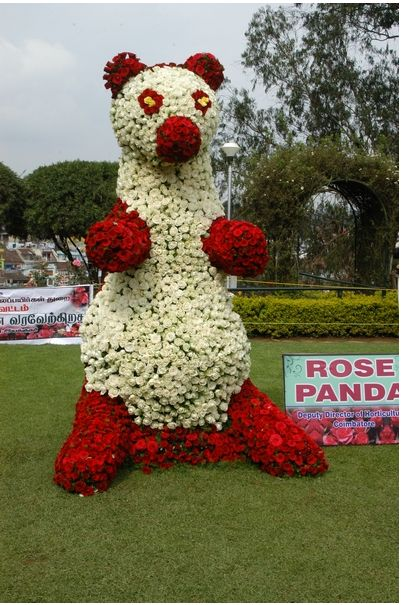 2012 Ooty Rose Show Photos