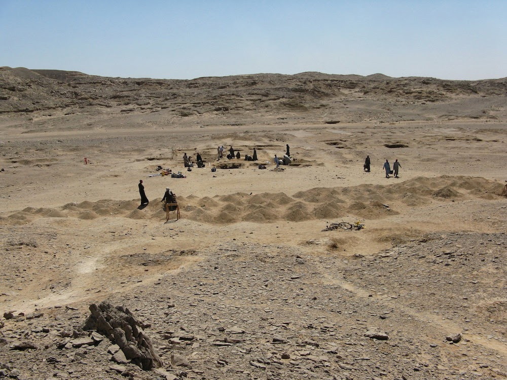 Domestication of cats in Egypt earlier than thought