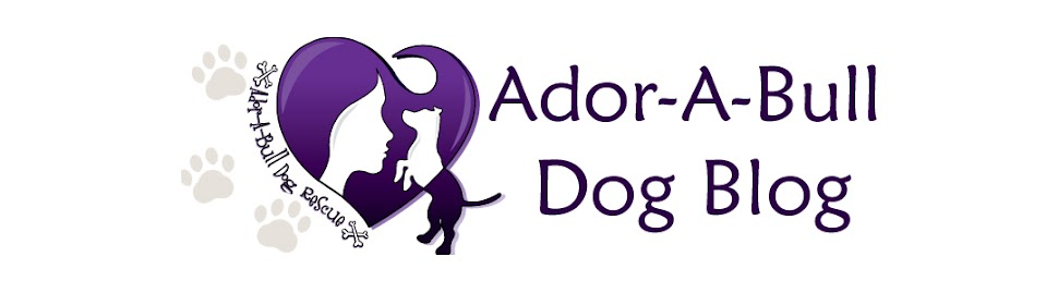 Ador-A-Bull Dog - Blog