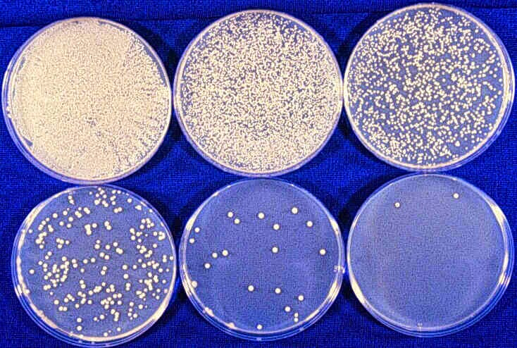 Bio-Resource: Serial Dilution of Bacterial culture / Stock ...