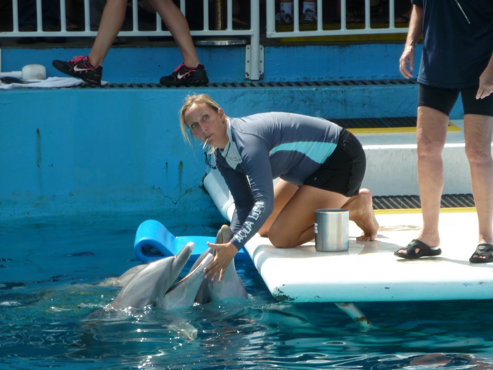 Clearwater Marine Aquarium - Home of Winter and Much More ... on