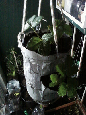 Full Capacity inverted strawberry planter