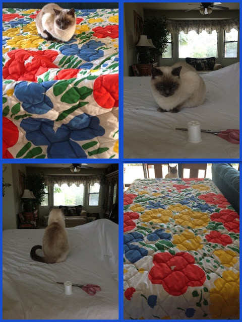 siamese cat sitting on a quilt