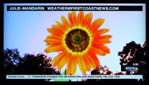 autumn beauty sunflower on the evening news