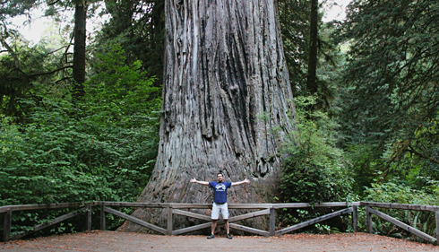 redwoods california pictures