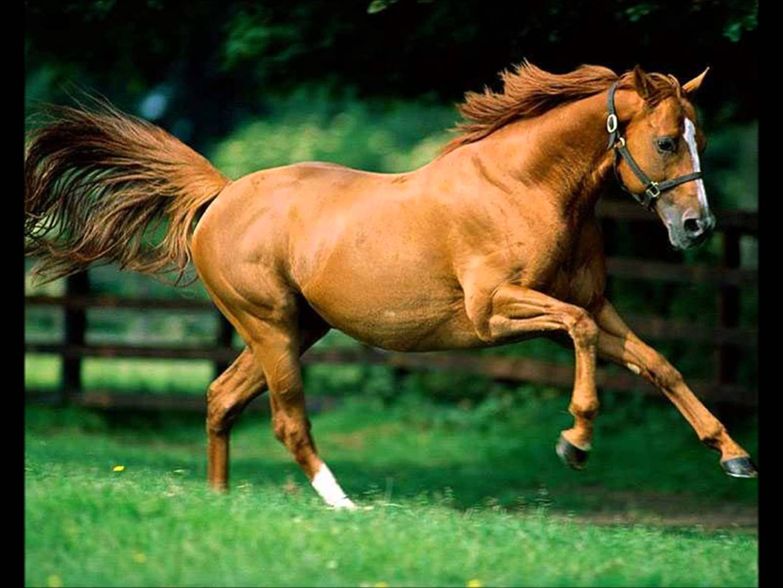 Fondos para whatsapp patada de caballo animales fondos for Fondos de escrito