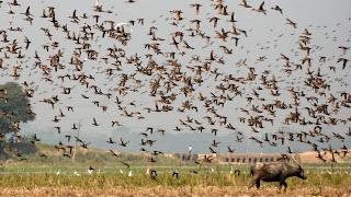 Monsoon Migratory Birds