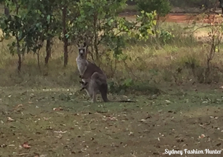 A kangaroo and joey visit for breakfast