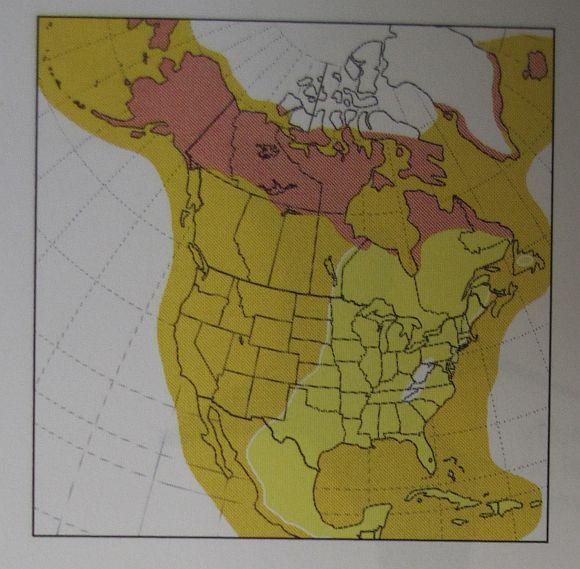 Red Phalarope Range Map Red-necked Phalarope Range Map