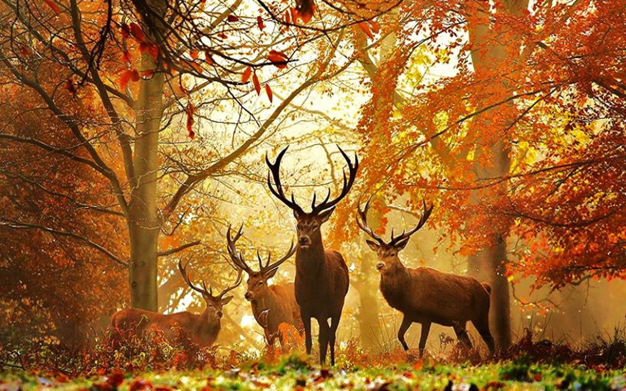 http://4.bp.blogspot.com/-gXFMVHSy1TI/TVuO8bst_8I/AAAAAAAAIEw/PcXWporJZmY/s1600/Deer+wallpaper+%25286%2529.jpg