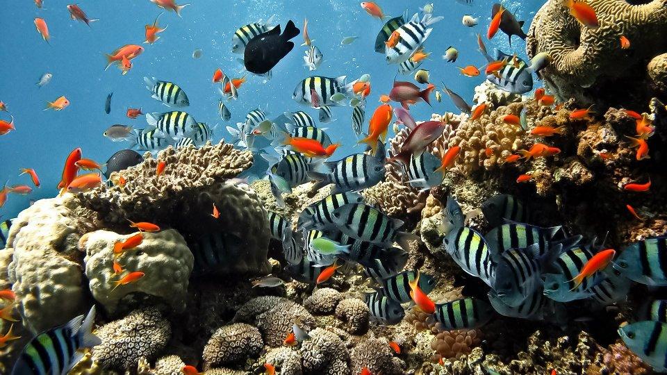 Fotografias de fondos de mar fotografias y fotos para - Fotos fondo del mar ...