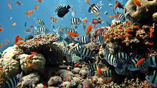 Los peces más espectaculares Fotografias de fondos de mar