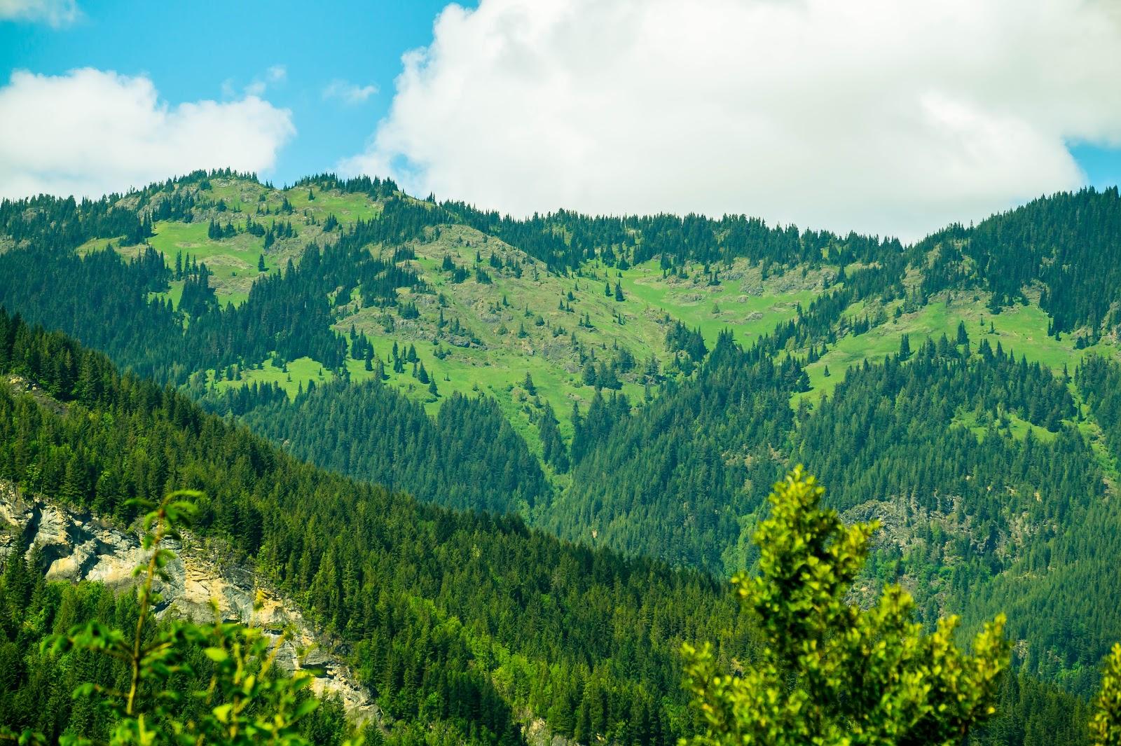 На высоте нескольких сотен метров раскинулись самые настоящие альпийские луга.