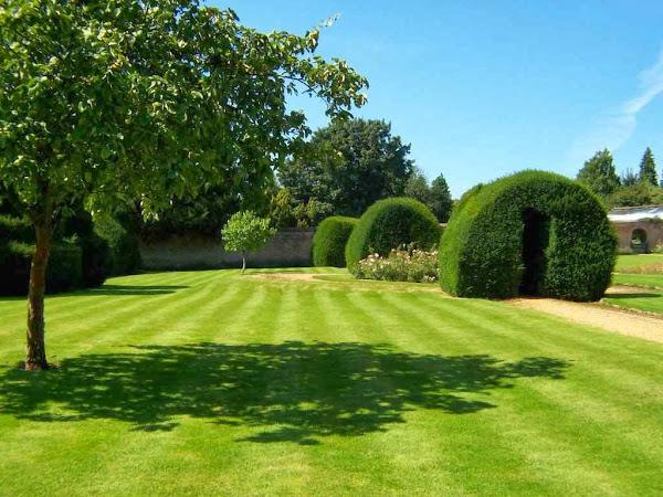 Paisajista cuidar de tus plantas es for Jardin paisajista